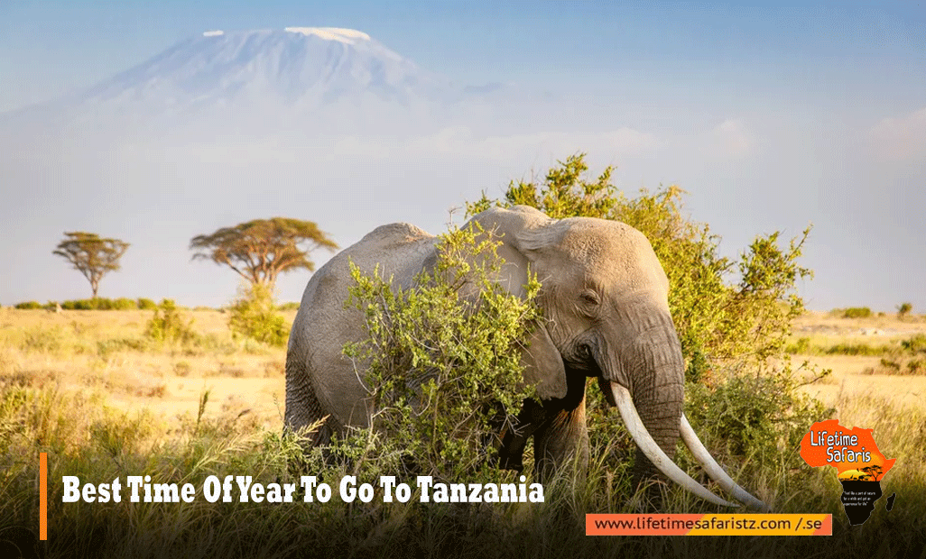 Best-Time-Of-Year-To-Go-To-Tanzania