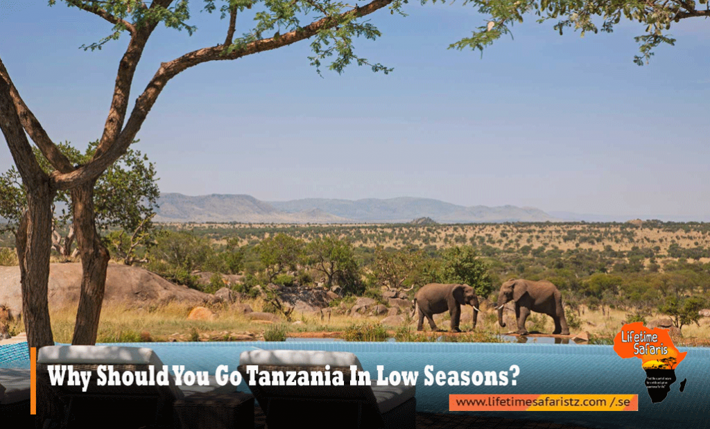 Why-Should-You-Go-Tanzania-In-Low-Seasons