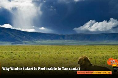 Why Winter Safari Is Preferable In Tanzania