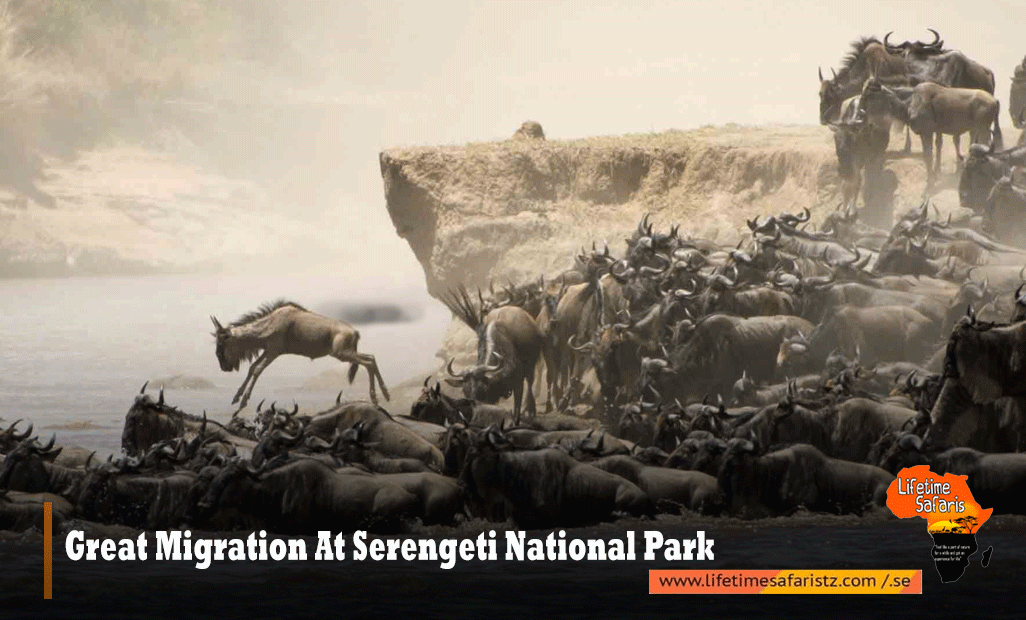 GREAT MIGRATION AT SERENGETI NATIONAL PARK