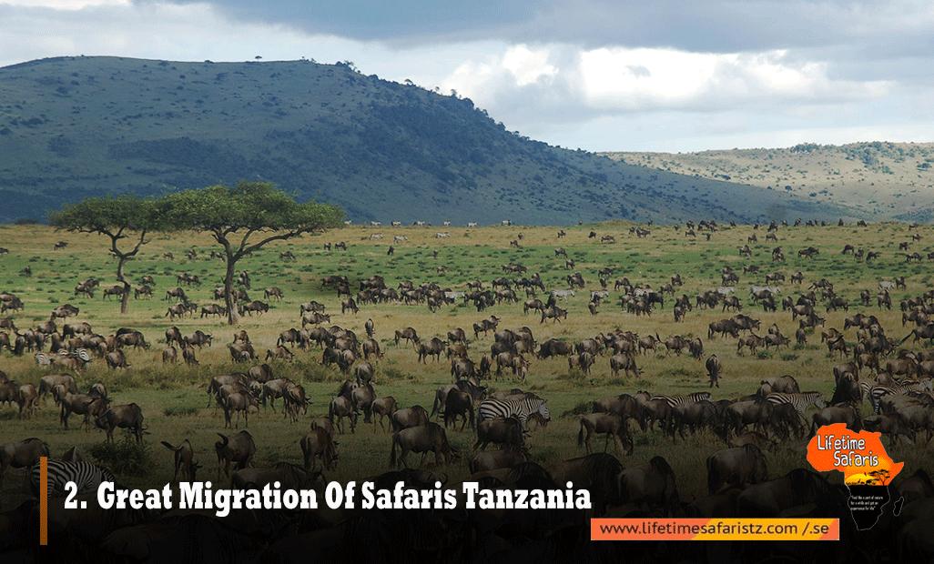 Great-Migration-Of-Safaris-Tanzania