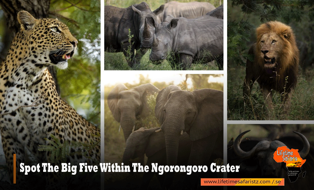 SPOT THE BIG FIVE WITHIN THE NGORONGORO CRATER