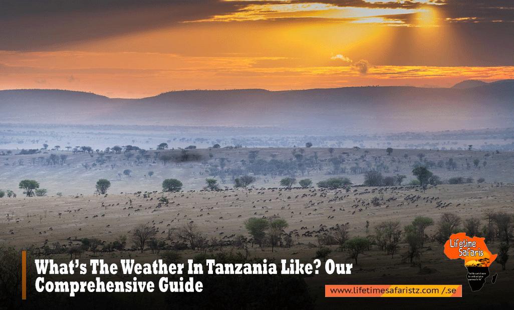 Tanzania Weather