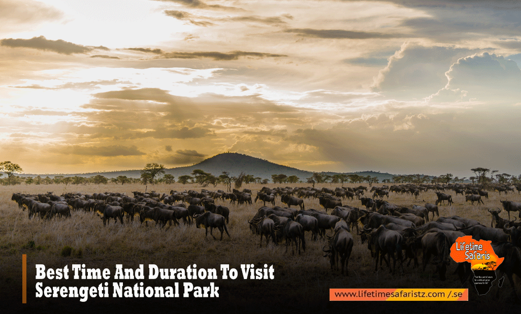 Best Time And Duration To Visit Serengeti National Park