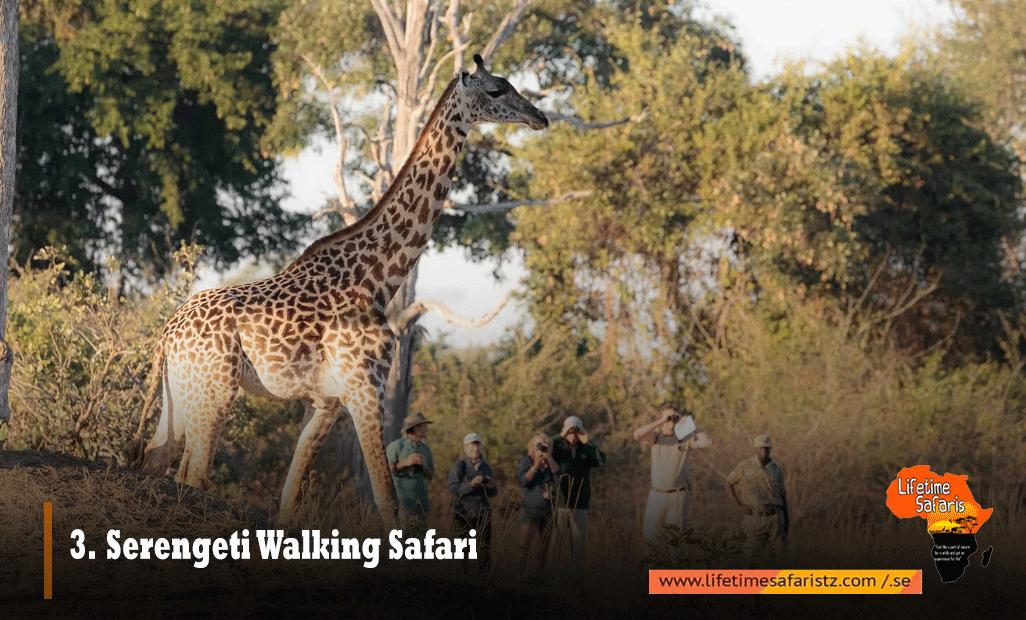 Serengeti Walking Safari
