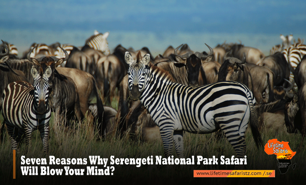 Seven Reasons Why Serengeti National Park Safari Will Blow Your Mind?