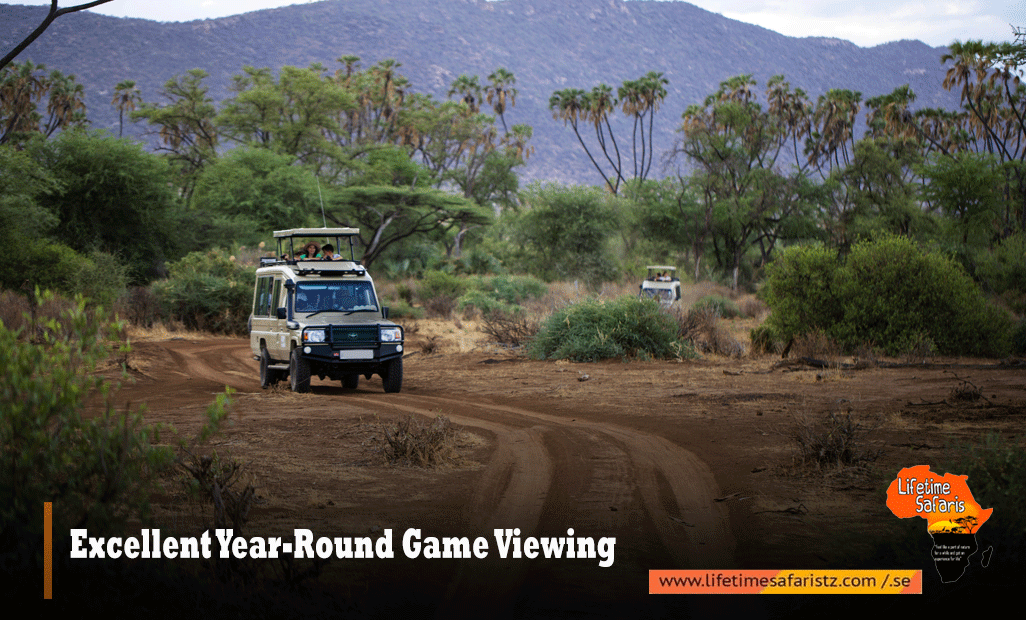 Excellent Year-Round Game Viewing