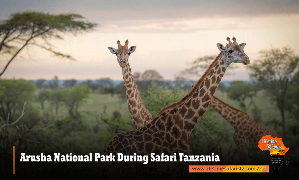 Arusha-National-Park-During-Safari-Tanzania