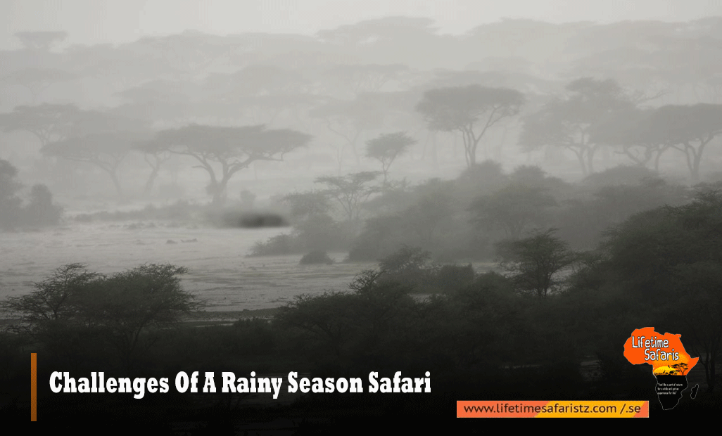 Challenges Of A Rainy Season Safari