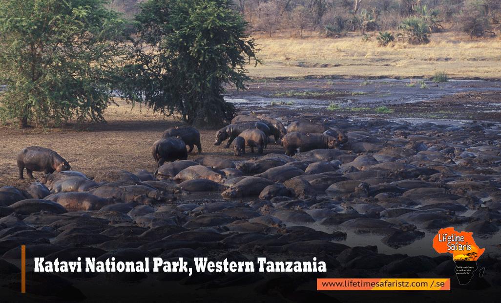 Katavi-National-Park,-Western-Tanzania