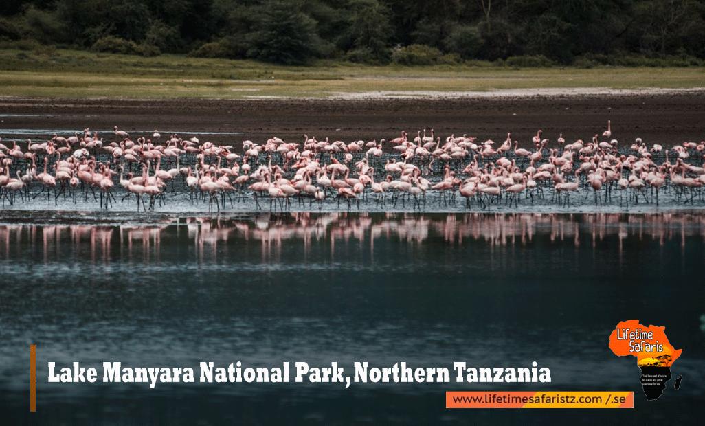 Lake-Manyara-National-Park,-Northern-Tanzania