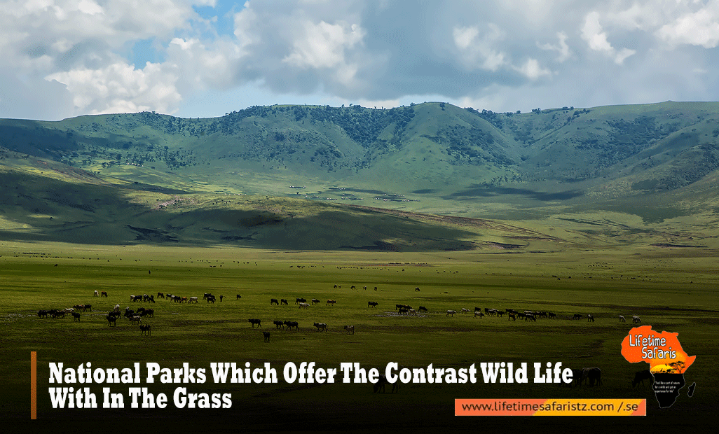National-Parks-Which-Offer-The-Contrast-Wild-Life-With-In-The-Grass