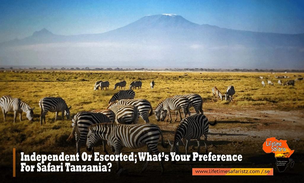 Preference-For-Safari-Tanzania