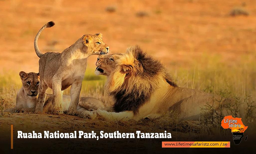 Ruaha-National-Park,-Southern-Tanzania