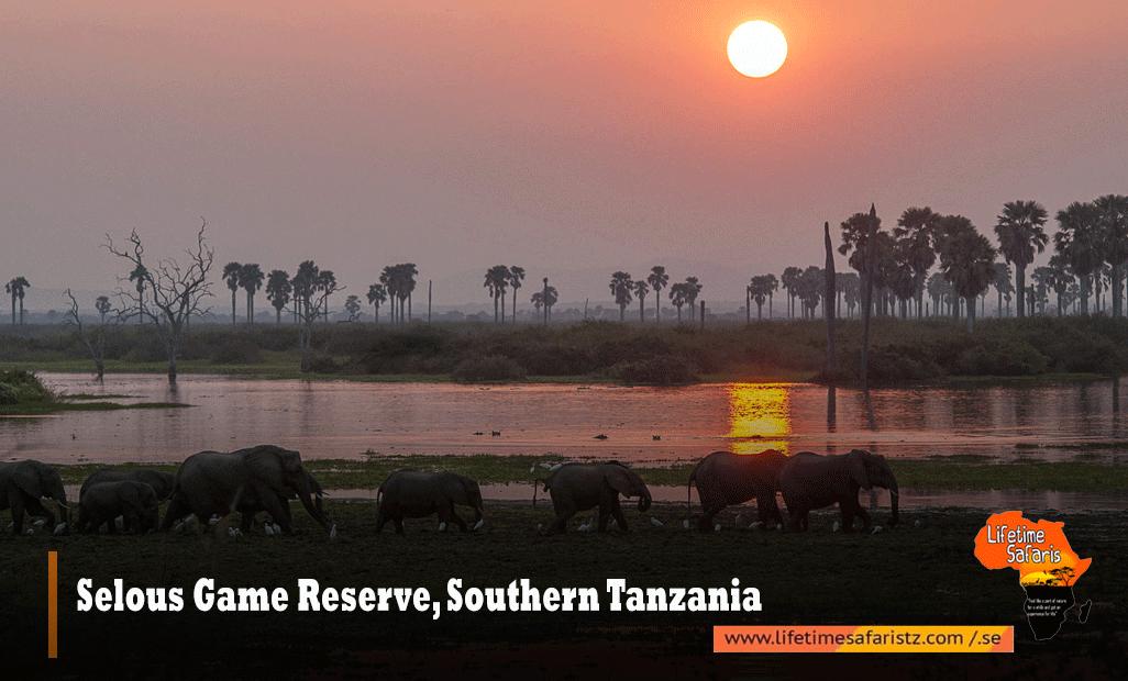 Selous-Game-Reserve,-Southern-Tanzania