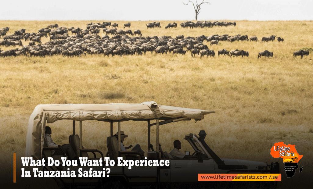 What-Do-You-Want-To-Experience-In-Tanzania-Safari