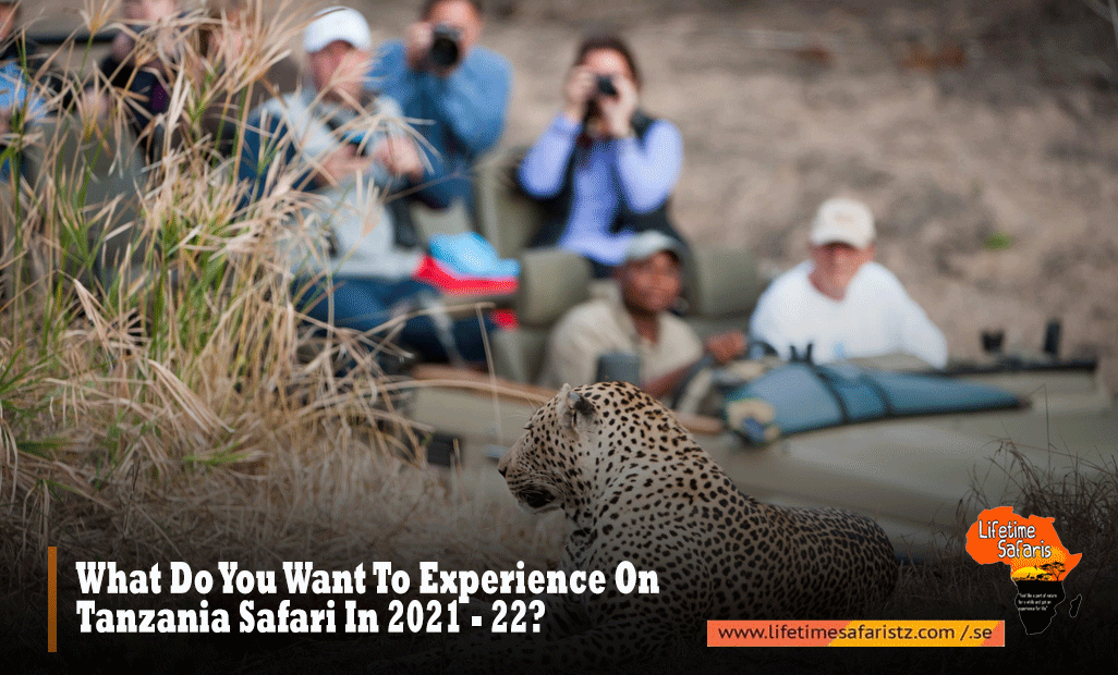 What-Do-You-Want-To-Experience-On-Tanzania-Safari-In-2021---22