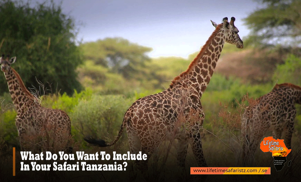 What-Do-You-Want-To-Include-In-Your-Safari-Tanzania