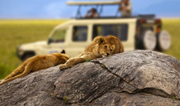 8 Days Tanzania Adventure Midrange Safari