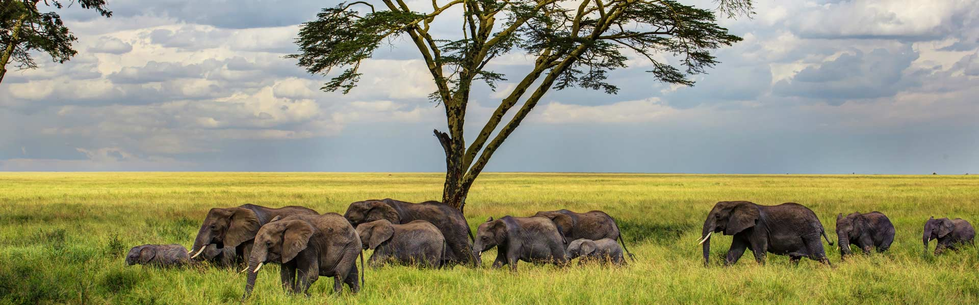 Your Dream Lifetime Safaris Starts Here