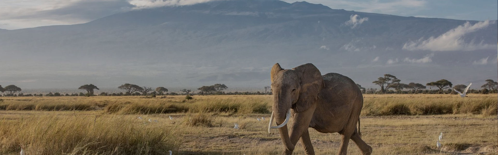 Tanzania Travel Tips To Know Before You Go